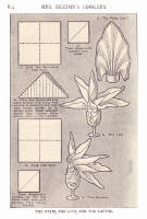 Napery. Picture of stages of a napkin fold in the style of a lily.